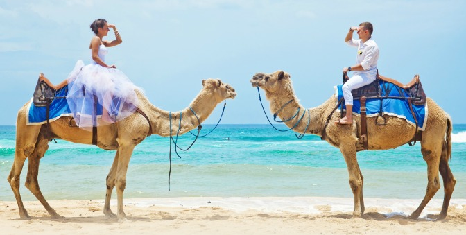 Bride and groom riding camels on the beach