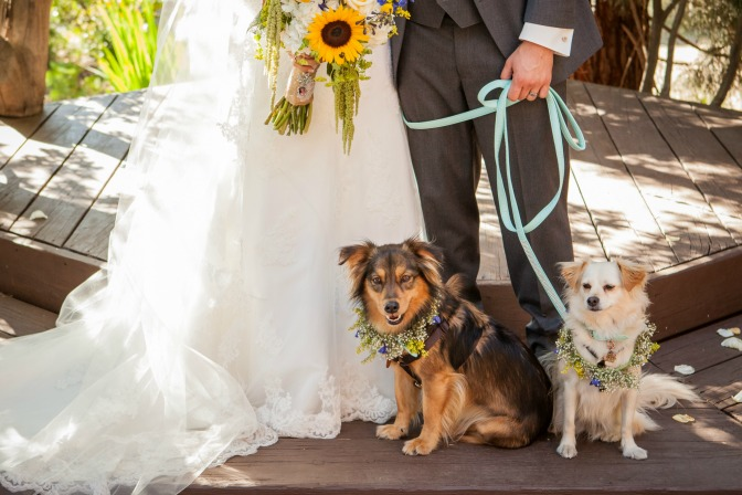 millennial-wedding-trends-pet-wedding-reg