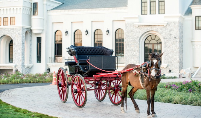 Horse and carriage unusual event vendor